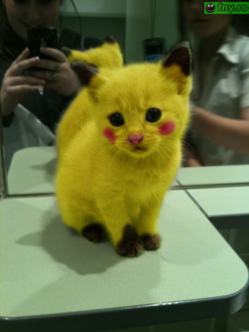 Pokemon imagini haioase
