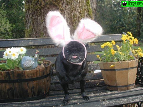 Easter bunny imagini haioase