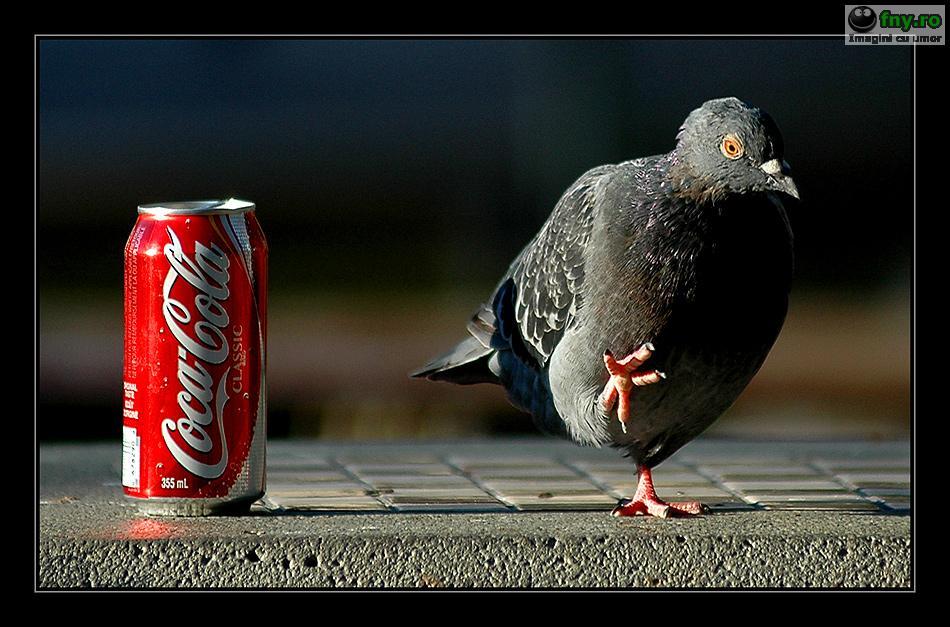 Parerea porumbelului imagini haioase