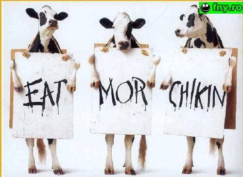 Reclama la carne de pasare imagini haioase