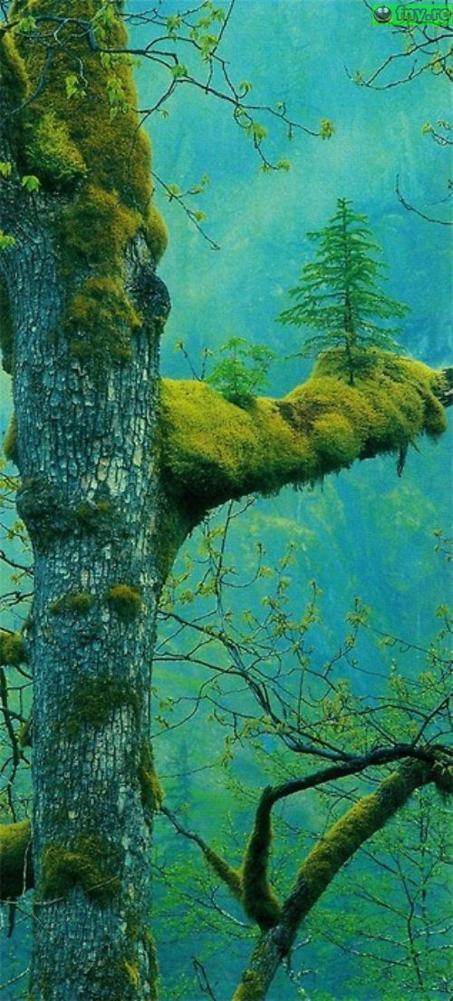 Copacul din copac imagini haioase