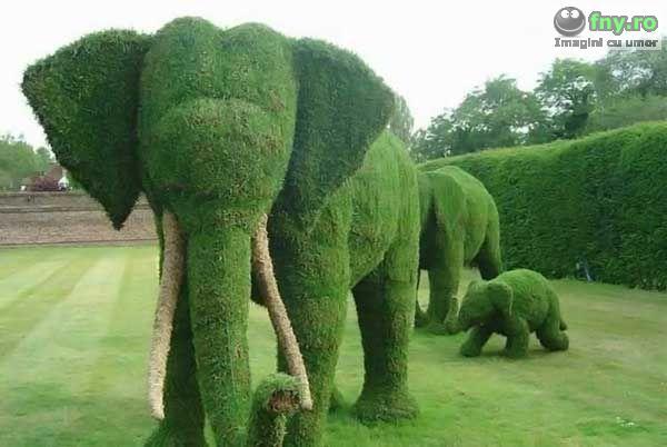 Familie de elefanti imagini haioase