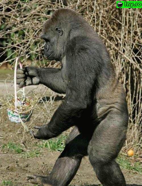 Maimuta de Paste imagini haioase