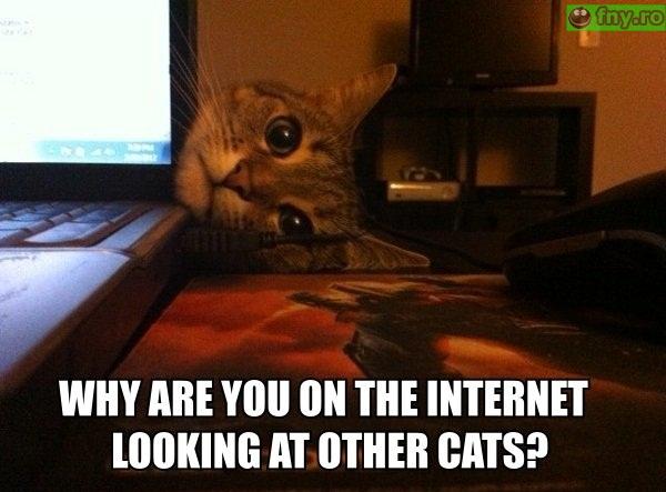 Pisica geloasa imagini haioase