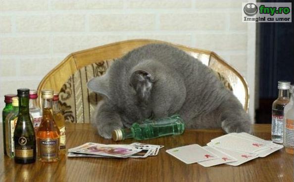 Pisica mahmura imagini haioase