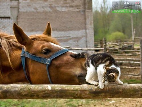 Dragoste animalica imagini haioase