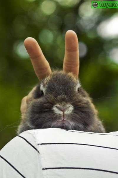 Urechi de iepure imagini haioase