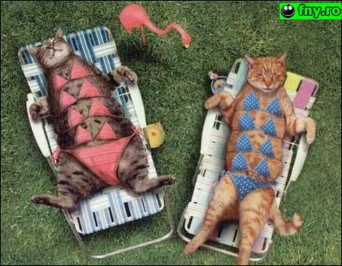 Pisici la plaja imagini haioase