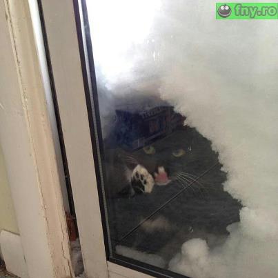 Pot intra? imagini haioase