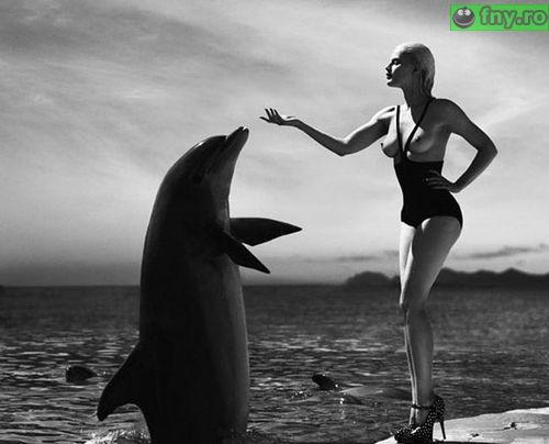 Cum se antreneaza un delfin imagini haioase