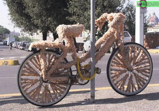 Bicicleta blanoasa imagini haioase