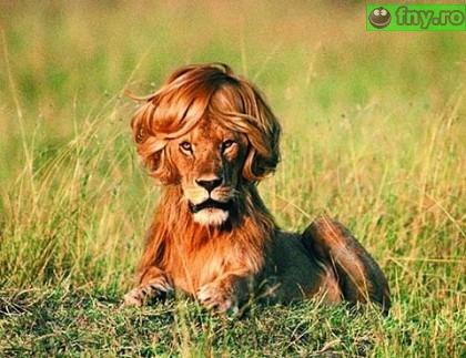 Cel mai gay leu imagini haioase