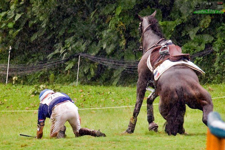 Care-i calul? imagini haioase