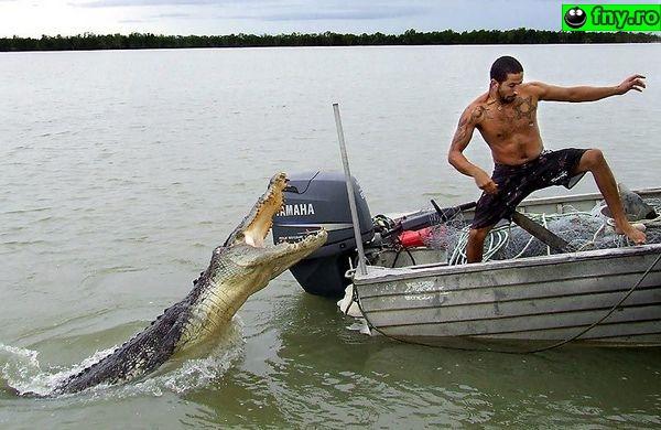 La pescuit de crocodili imagini haioase