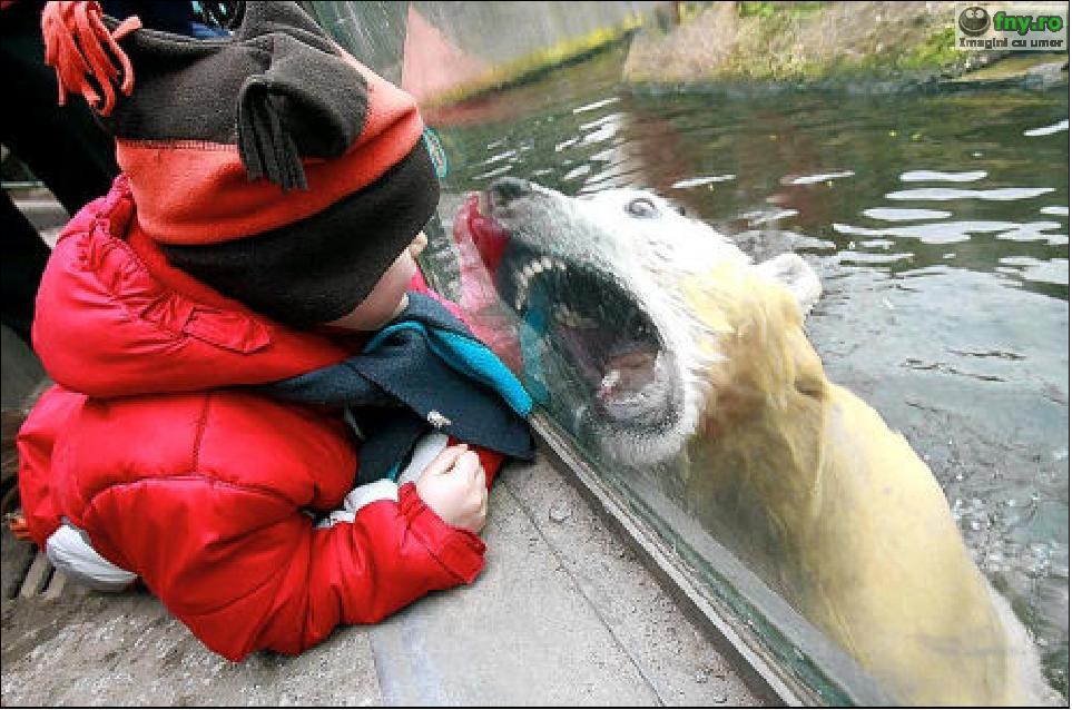 Ursulet dragalas imagini haioase